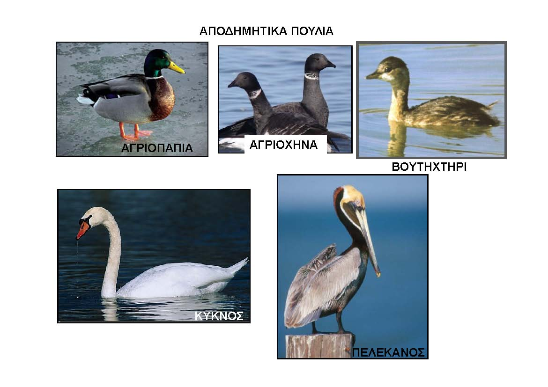 Αποδημητικά πουλιά